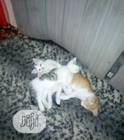 Baby Female Mixed Breed Mongrel (No Breed) | Cats & Kittens for sale in Akwa Ibom State, Uyo