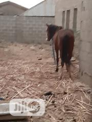 Very Healthy Horse | Other Animals for sale in Kaduna State, Kaduna