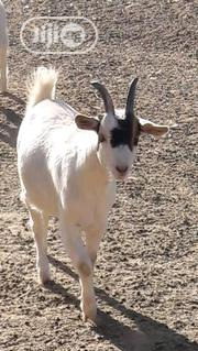 Your Choice Goat | Livestock & Poultry for sale in Benue State, Logo