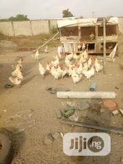Cockerel For Sale | Livestock & Poultry for sale in Lagos State, Ibeju