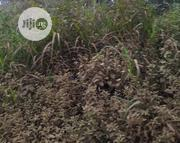 Plots Of Land For Sale With C Of O At Lekki | Land & Plots For Sale for sale in Lagos State, Lekki Phase 2