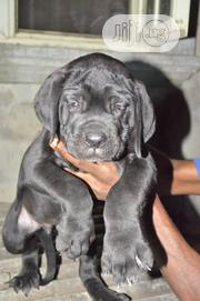 Veterinary Services   Pet Services for sale in Lagos State, Lagos Island