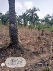 2 Plots of Land for Sale at an Affordable Price | Land & Plots For Sale for sale in Imo State, Mbaitoli