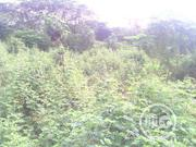 2 Acres Of Farmland For Sale In Ibadan | Land & Plots For Sale for sale in Oyo State, Ibadan