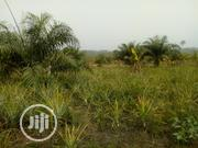 Acres of Land at Oderemi Off Elenusonso, Ido Lg ,Ibadan   Land & Plots For Sale for sale in Oyo State, Ido