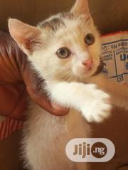 Baby Female Mixed Breed Turkish Angora | Cats & Kittens for sale in Ekiti State, Ado Ekiti