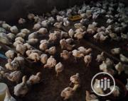 Four Weeks Old Broiler For Sale | Livestock & Poultry for sale in Edo State, Ikpoba-Okha