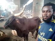 Big Cow Available For Sale | Livestock & Poultry for sale in Lagos State, Lagos Island