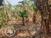A Plot of Land Belonging to Me   Land & Plots For Sale for sale in Enugu State, Nsukka