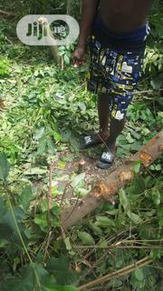 Family Land   Land & Plots For Sale for sale in Oyo State, Ido