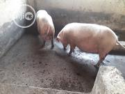 Pigs Of All Ages And Sets | Livestock & Poultry for sale in Anambra State, Ihiala
