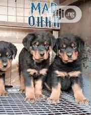Young Female Purebred Rottweiler | Dogs & Puppies for sale in Lagos State, Lagos Island