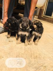 Baby Female Purebred German Shepherd Dog | Dogs & Puppies for sale in Lagos State, Lagos Island