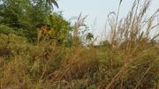Land For Lease | Land & Plots for Rent for sale in Edo State, Ubiaja