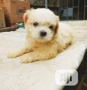 Baby Male Purebred Lhasa Apso | Dogs & Puppies for sale in Lagos State, Ilupeju