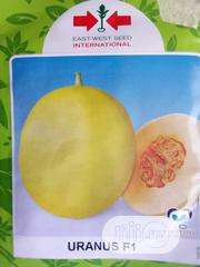 Uranus F1 Sweet Melon (1000 Seed Pack)   Feeds, Supplements & Seeds for sale in Delta State, Uvwie