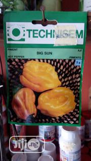 Big Sun Hybrid Pepper Seed   Feeds, Supplements & Seeds for sale in Delta State, Uvwie