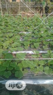 Staking Net For Cucumber, Pumking, Green Beens Etc | Feeds, Supplements & Seeds for sale in Delta State, Uvwie