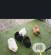 Baby Female Purebred Chow Chow | Dogs & Puppies for sale in Lagos State, Oshodi-Isolo