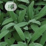 Organic Sage Seed And Sage Seedling   Feeds, Supplements & Seeds for sale in Lagos State, Victoria Island