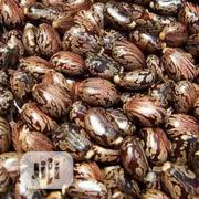 Organic Castor Seed Castor Bean | Feeds, Supplements & Seeds for sale in Lagos State, Victoria Island