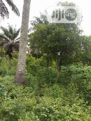 1000 Acres of Genuine Farmland for Sale | Land & Plots For Sale for sale in Oyo State, Iseyin