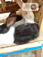 Post Weaners For Sales | Other Animals for sale in Lagos State, Ifako-Ijaiye