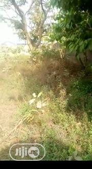 Half Plot of Land for Sale in Ago-Okota, Lagos | Land & Plots For Sale for sale in Lagos State, Oshodi-Isolo