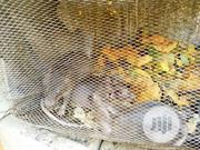 Life Bush Rat Male N Female | Other Animals for sale in Lagos State, Mushin