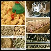 Producing Quality Livestock Feed Using Cheap Feedstuffs | Feeds, Supplements & Seeds for sale in Kwara State, Ilorin South