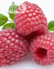 Raspberry Seedlings | Feeds, Supplements & Seeds for sale in Ogun State, Ado-Odo/Ota
