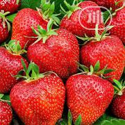 Strawberry Seedlings | Feeds, Supplements & Seeds for sale in Ogun State, Ado-Odo/Ota