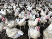 Farmfresh Broilers For Sale | Livestock & Poultry for sale in Rivers State, Port-Harcourt