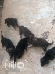 Baby Female Purebred German Shepherd Dog | Dogs & Puppies for sale in Oyo State, Ibadan
