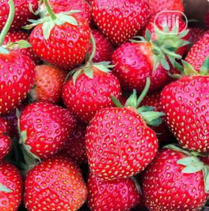 Fresh Strawberries Available