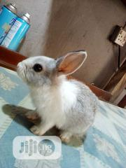 Lovely Minnie | Other Animals for sale in Lagos State, Surulere