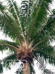 Pure Palm Oil | Feeds, Supplements & Seeds for sale in Ogun State, Ijebu