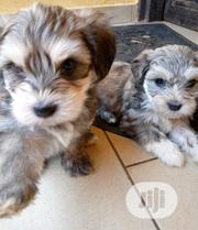 Baby Male Purebred Lhasa Apso | Dogs & Puppies for sale in Abuja (FCT) State, Bwari
