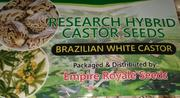 Buy High Yield Hybrid Castor Seeds | Feeds, Supplements & Seeds for sale in Lagos State, Victoria Island