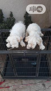 Baby Male Purebred Lhasa Apso | Dogs & Puppies for sale in Abuja (FCT) State, Gwarinpa