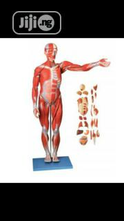 Muscles Of Internal Organs | Medical Equipment for sale in Lagos State, Mushin
