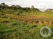 Land For Sale 100 By 50   Land & Plots For Sale for sale in Delta State, Ethiope East