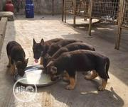 Baby Female Purebred German Shepherd Dog | Dogs & Puppies for sale in Ogun State, Abeokuta South
