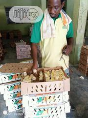 Eggs And Ostrich Chicks Are Available For Sale | Meals & Drinks for sale in Ogun State, Ado-Odo/Ota