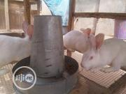 3 Matured Hyla Does For Sale | Livestock & Poultry for sale in Lagos State, Ipaja