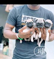 Baby Male Purebred Pug | Dogs & Puppies for sale in Lagos State, Mushin