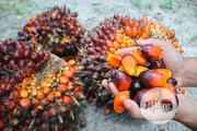Original Palm Oil (Red Oil) Direct From Farm (Akwaibom) | Meals & Drinks for sale in Lagos State, Ikeja