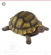 Turtle For Sale | Reptiles for sale in Lagos State, Surulere