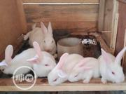 Rabbits For Sales | Livestock & Poultry for sale in Oyo State, Ibadan