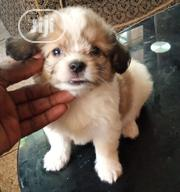 Baby Male Purebred Lhasa Apso | Dogs & Puppies for sale in Lagos State, Alimosho